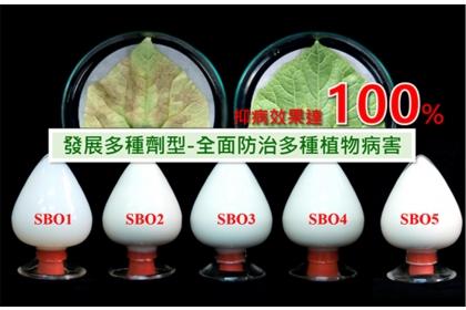 興大新創團隊開發的微奈米植物保護製劑能防治多種植物病害