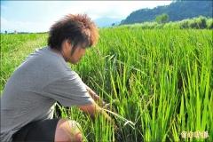 【媒體報導】54%農田不在灌區 農民受災求助無門